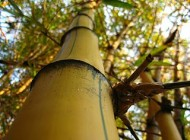 Una historia sobre la perseverancia: el cuento del bambú japonés